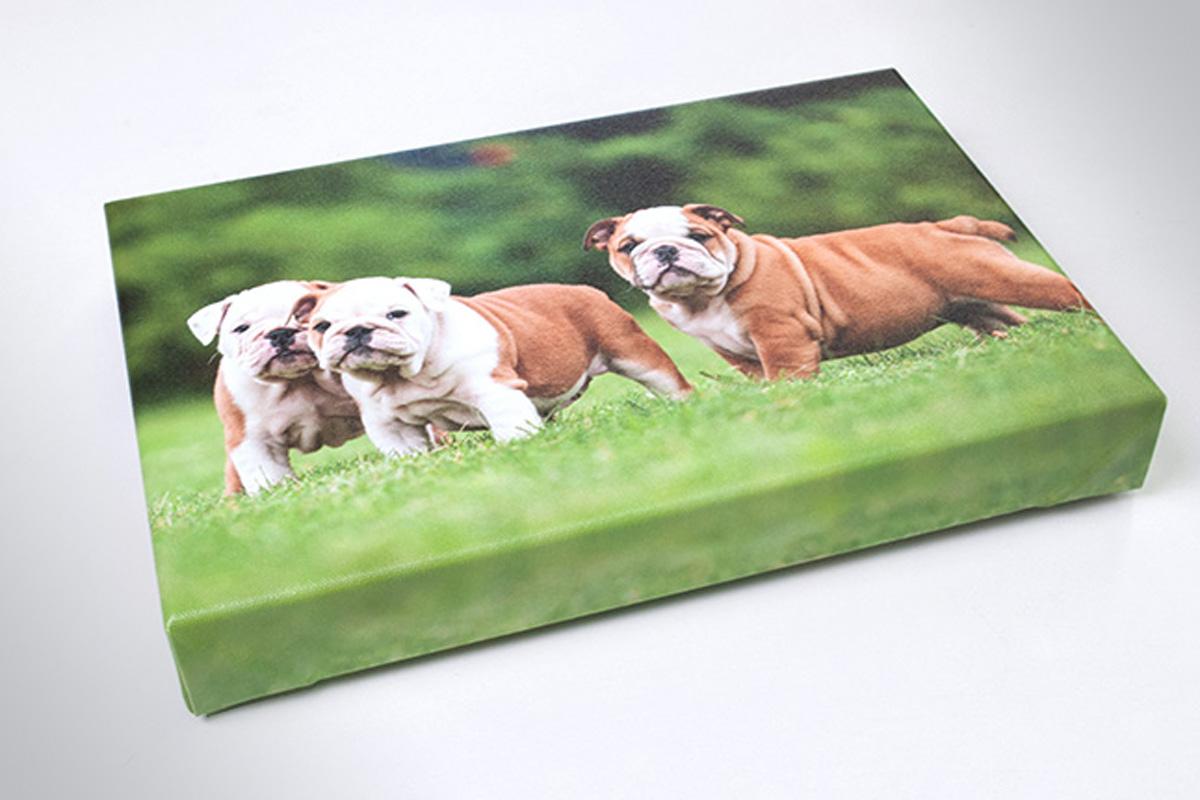 Propaganda Poreč slike na platnu psi